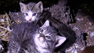 60+ Cats/Kittens Rescued from Farm Hoarding Situation