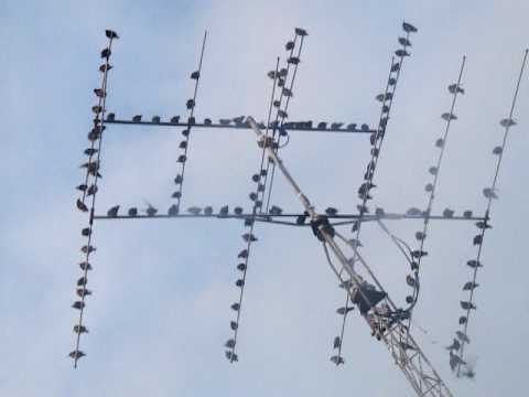 G8PIR/P Aerial Birds Video