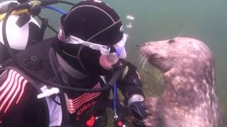 Scuba Diver Pets Seal Underwater