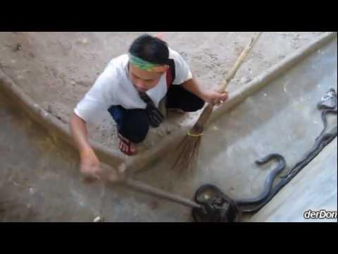 Compilaciones - FUNNY videos con escenas graciosas
