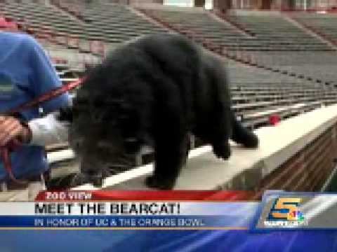 Zoo View: Lucy the Bearcat