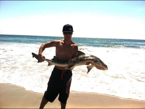 SOCAL shark fishing
