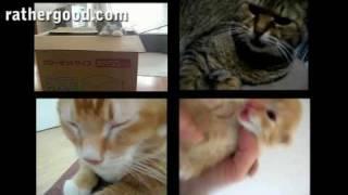 Thumb Los gatos más famosos de Internet cantando un MEGA MIX