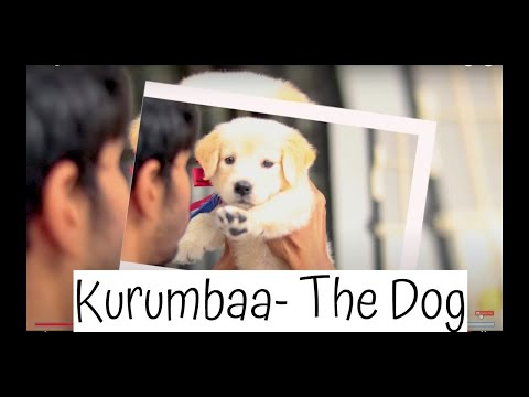 A Cute Story Of A Cute Dog |Dog Voice|