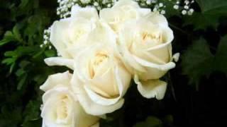 Gypsy Jazz - Saban Bajramovic - Bele Ruze (Whit Roses)