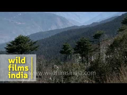 Haa valley of Bhutan