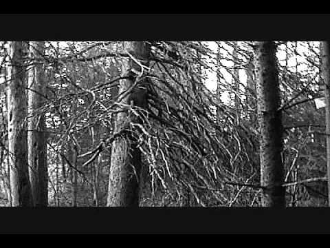 The Witch's Broom Tree
