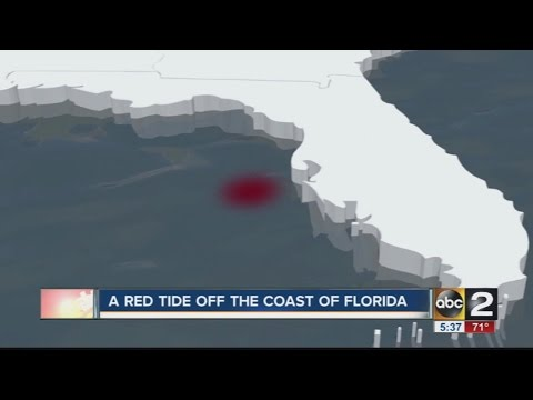 Red Tide Off Florida...BIGGER House Spiders...and LARGER Earthquakes