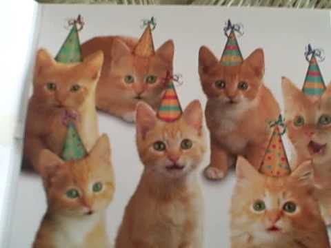 Kittens Birthday Song Kittens Singing Happy Birthday