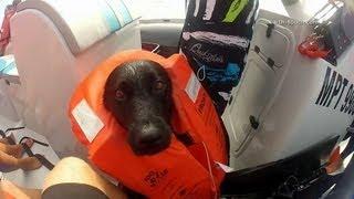 download lagu Dog Swims  Dolphins Soundtrack: Miike Snow 'animal' gratis