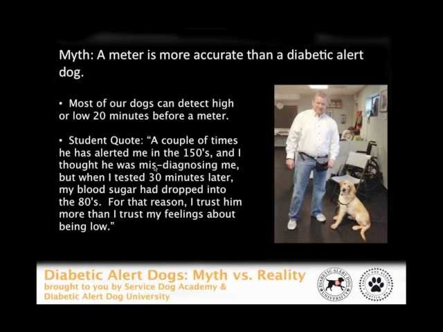 Diabetic Alert Dog Training Debunked - Save Yourself From Scams - Get The Truth