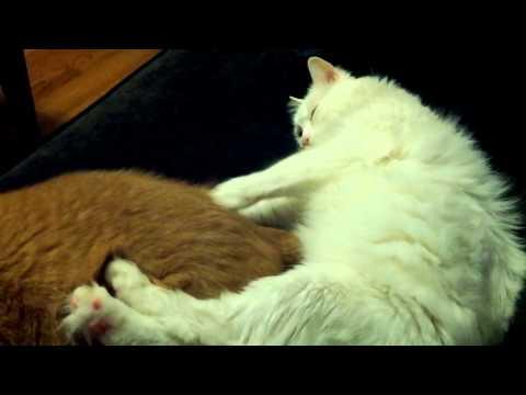 Cooper gives Aston a butt massage