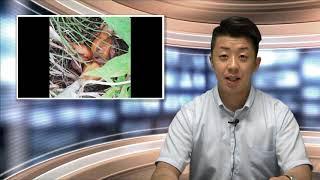 道端で玉ねぎが育つ 【FDNニュース】