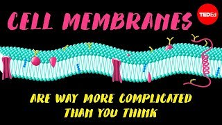 Cell membranes are way more complicated than you think - Nazzy Pakpour