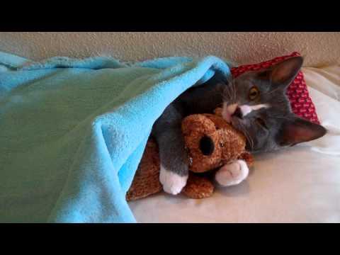 大好きだからむぎゅ~っ!! テディベアを抱きしめる猫
