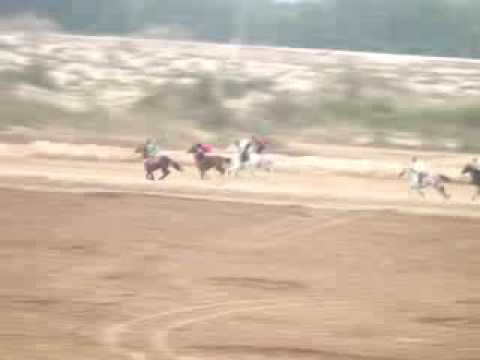 Arabian Horse Race, Dammam, Thursday: 26 November, 2009