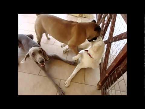 dogwalkers : Blank Ozzy Malu