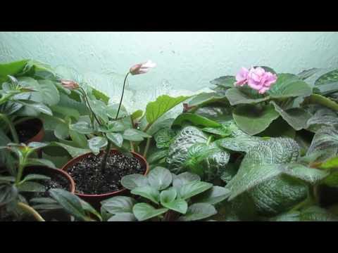 Как помочь растениям в огороде при граде, ливнях, засухе жаре и отсутствии опыления