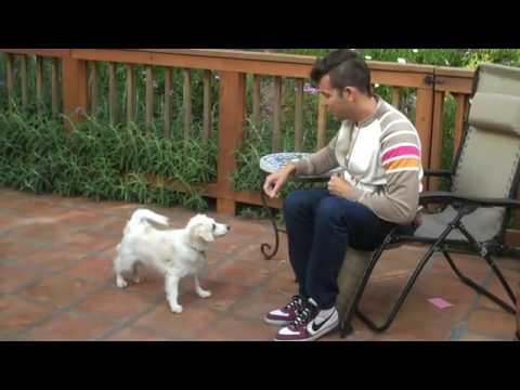 Zack Hexum - Animal Boy