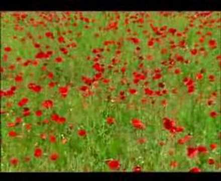 Furies - Green Fields Of France