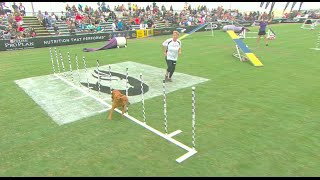 Large Dog Agility Competition - 2016 Purina® Pro Plan® Incredible Dog Challenge® Western Regionals