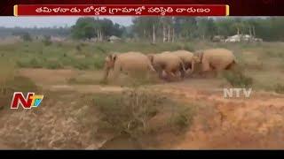Elephant Gang Destroys Crops in Chittoor District | చిత్తూర్ లో పంటలను ధ్వంసం చేస్తున్న ఏనుగులు