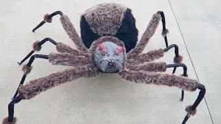 Crazy Giant Spider Prank!