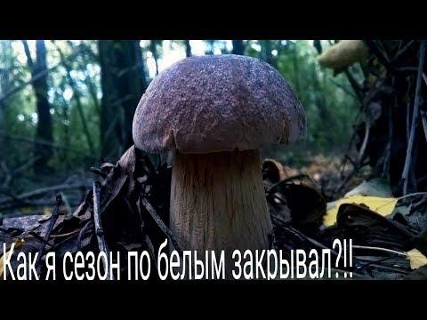 Сбор грибов! Как я закончил сезон по белым грибам?! От 25.09.2017