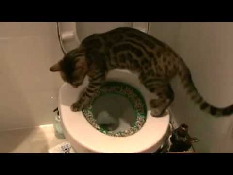 cat tracking poop out of litter box