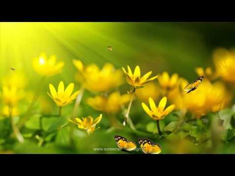 Анимированные обои для рабочего стола.  Цветы, бабочки!