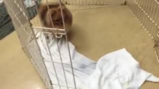 モデル犬のまりちゃん