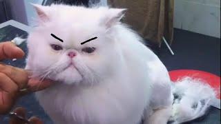 Grumpy Cats Video Compilation 2016
