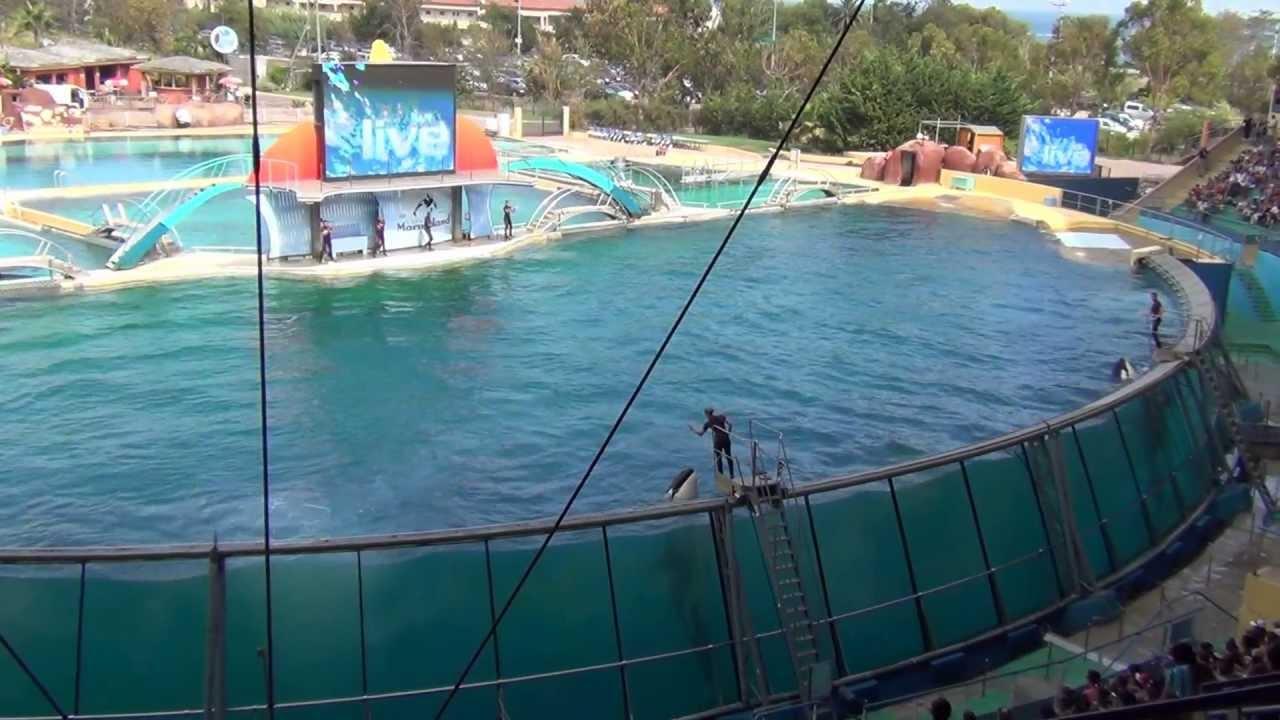 Killer whale show, Marineland, Antibes, France - YouTube