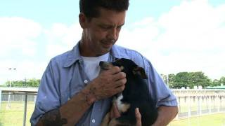 Prison Inmates Caring for Shelter Pets