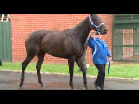 Black Caviar bows out - champion mare retired