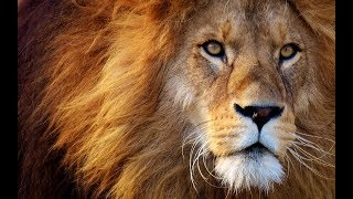 The fastest ten animals on Earth