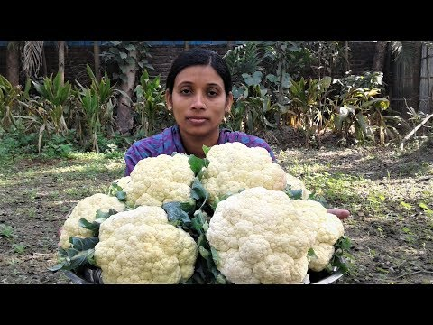 Cauliflower Masala Curry | Vegetarian Cauliflower Recipes Cooking By Street Village Food
