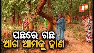 Opposing beer factory, villagers guard trees in Dhenkanal