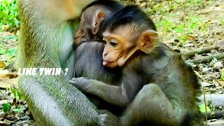OMG, Look Like The Twin, Feel Lonely Baby Monkey Lizza Hugging Carlino & Mom Candy, Lovely