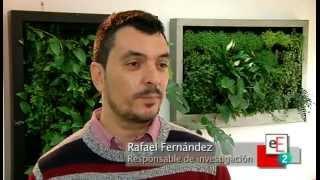 Reportaje sobre Terapia Urbana, diseño de jardines verticales, en Espacio Empresa, tve2