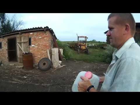 Поилка для утят // Жизнь в деревне.