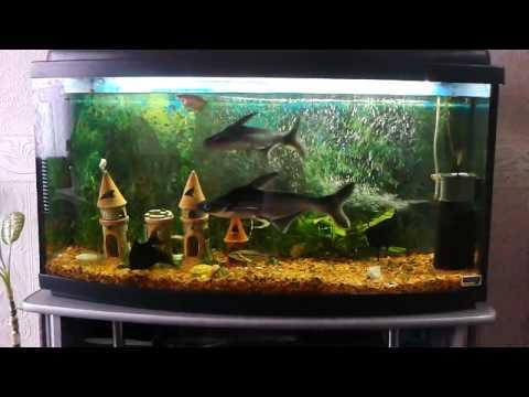 белая акула в аквариуме видео