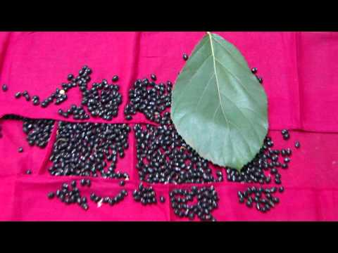 Pankaj Oudhia's Healing Herbs: Diabetes mellitus Type 2 with Impaired Libido ...