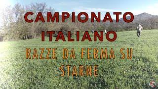 16° Campionato Italiano per razze da ferma su starne