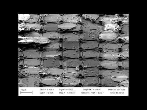Flir Lepton electron microscope images