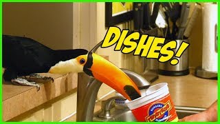 Toucan loves helping with the dishes!!