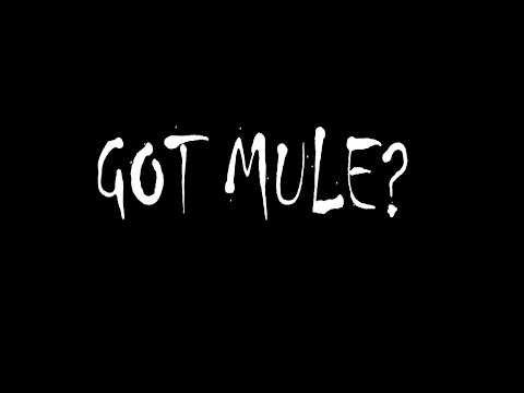 Gov't Mule - End Of The Line