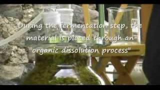 Soluna Medicinal Gardens - Part 2