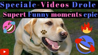 Watch and try to stop laughing - Super FUNNY VIDEOS compilation 4