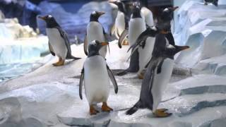 Inside the largest penguin facility in the world, Detroit Zoo's new Polk Penguin Conservation Center